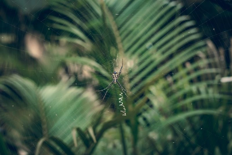 Spider. Spider Bali, Indonesia Summer Bali Travel Insect One Animal Invertebrate Animal Close-up Animal Wildlife Animals In The Wild Animal Themes Nature No People Green Color Arachnid Focus On Foreground Arthropod Plant Selective Focus Spider Spider Web Animal Body Part Outdoors