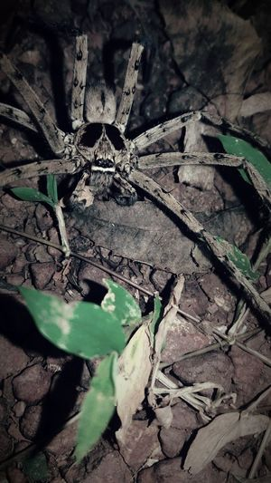 Mobile Photography spider 🕷 No People Outdoors Spiderman Spiderworld Spider Eyes Spider Nature_collection Eyenaturelover Rare Photography The Week On EyeEm Perspectives On Nature EyeEmNewHere