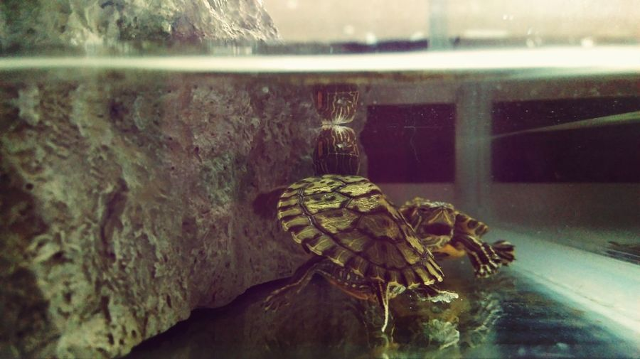 So cute Hanging Out Turtles Animals Cute Pets