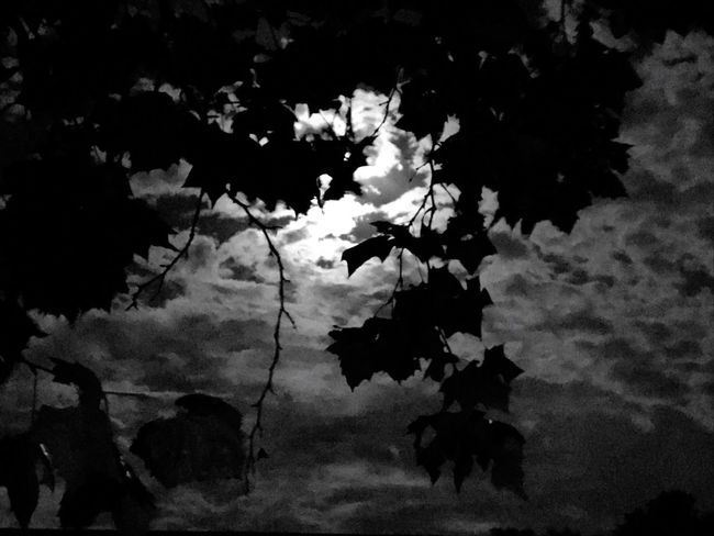Lost In The Landscape Nature space moon 🌙 clouds trees 🌲 leaves 🍁 October Moonlight Night Warm Autumn Night time photography Photo shot with IPhone camera cell phone 📱 camera Nature has natural beauty Silhouette Low Angle View Outdoors Growth Sky 🌌 Full Moon 🌕 Black And White Photography People Creative Light And Shadow Streetphotography Authentic Moments Portrait Monocrome Moon 🌙 photography Moon Shots from small towns in Oklahoma Discover Berlin Original Photo Original photography and experience