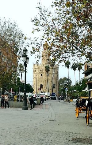 Tree City Street Travel Destinations Building Exterior Outdoors Mode Of Transport Architecture Monument Tourist Destination Travel Photography Architecture City GOLD TOWER Sevilla Downtown Gardens