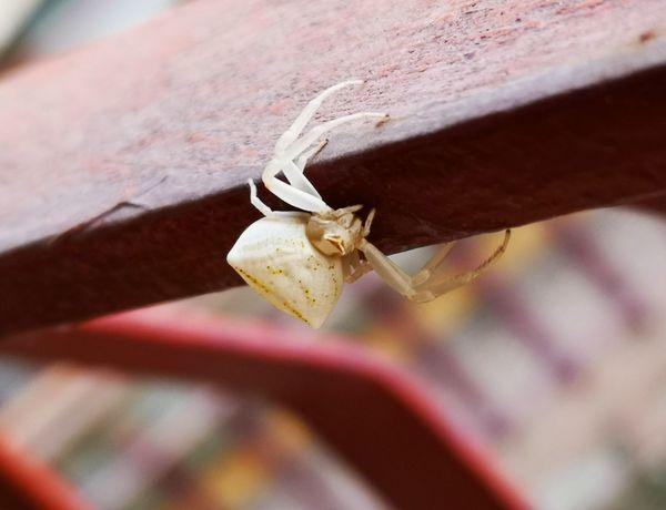 EyeEm Selects Insect Rusty Close-up Animal Themes Ant Spider Web Spider Animal Leg Web Arachnid Arthropod Invertebrate