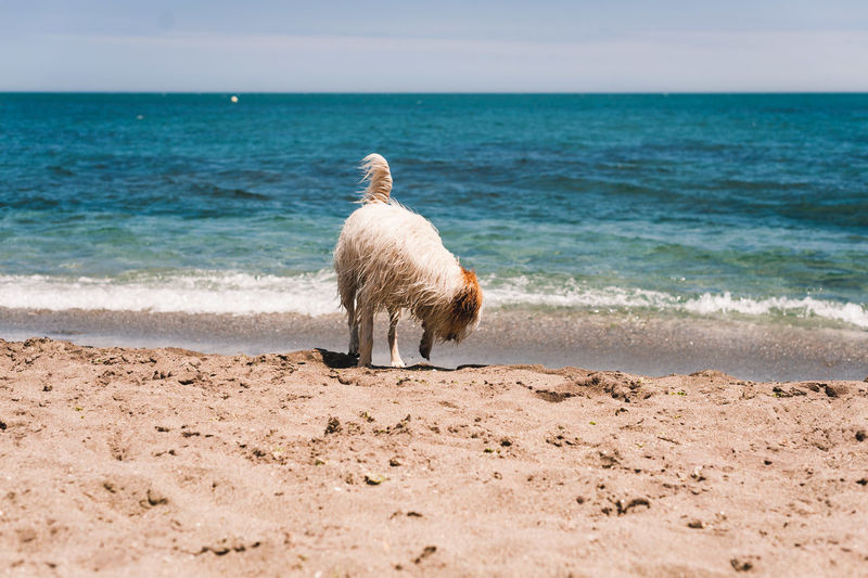 View of a horse on the beach