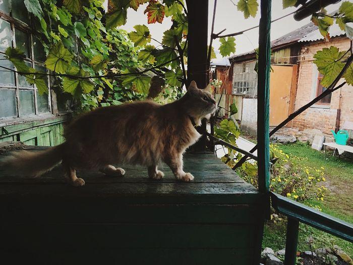 Cat Leaf Look
