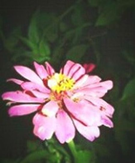 A flower from