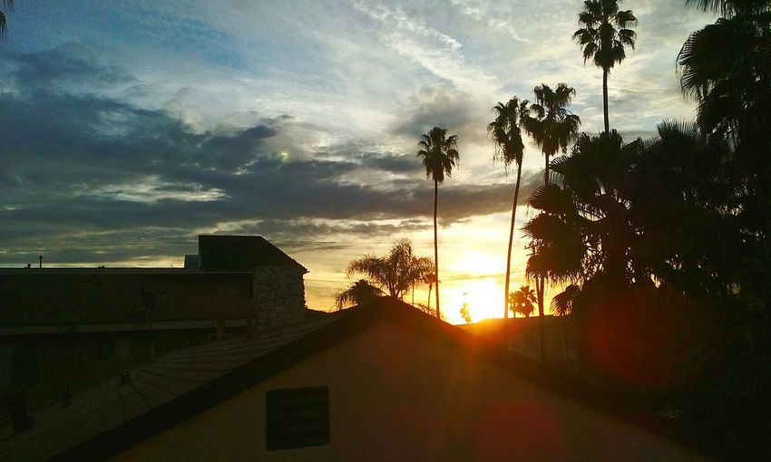 Somewhere in Long Beach Sunset Palm Trees Photography Photograph Photographer