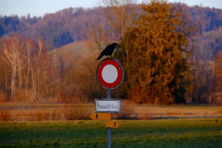 Sign Communication Tree Autumn Land Plant No People Nature Day Guidance Focus On Foreground Road Sign Scenics - Nature Information Change Road Information Sign Text Beauty In Nature Tranquil Scene Outdoors