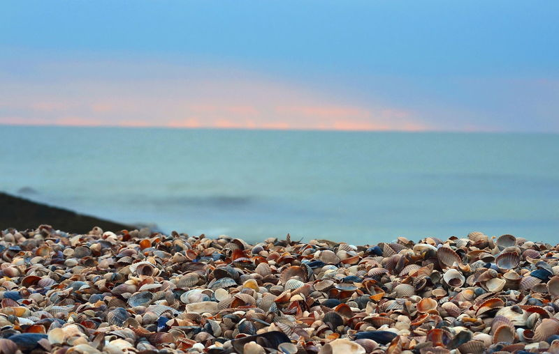 Seashells On Beach In Ukraine