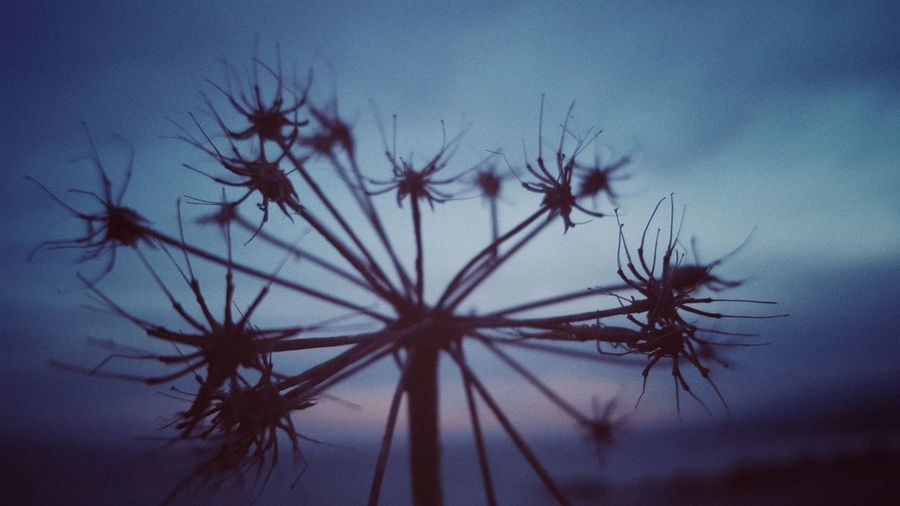 Close-up of silhouette plants against sky at dusk