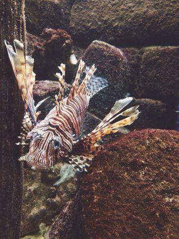 Lovely trip to the aquarium ?? Swimming Animals Fish Catfish Cute