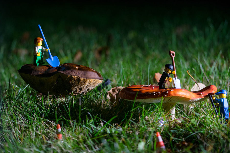 Composition Detail Focus On Foreground LEGO Miniature Mushroom Mushrooms No People Outdoors Working