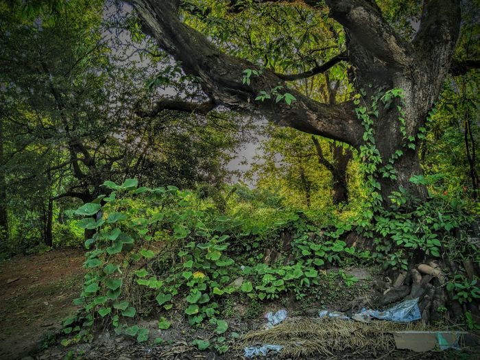 Background Backyard HDR Nature Tree Full Frame Fishing Net Close-up Green Color Tree Trunk Plant Bark Growing Woods Fallen Tree Fungus Sunrays Rough Greenery Dead Tree Rugged Stem Leaf Vein Droplet Moss Textured  Countryside Detail Bark Stalk Lakeside EyeEmNewHere