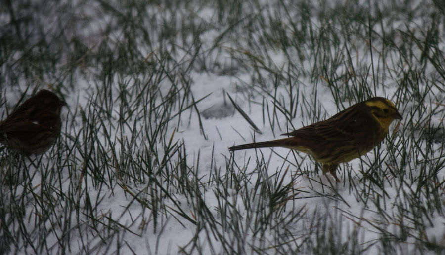 Birds flying over plants during winter