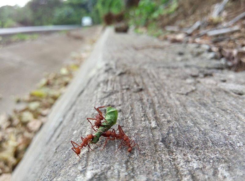 Adventure Club Ants Antslife Ants At Work Ants On The Go! Antsphotography Ants Close Up Hanging Out Check This Out Taking Photos Hello World Cheese! Relaxing Hi! Enjoying Life Love Photography Love Photography ♡ Nature Color Photography