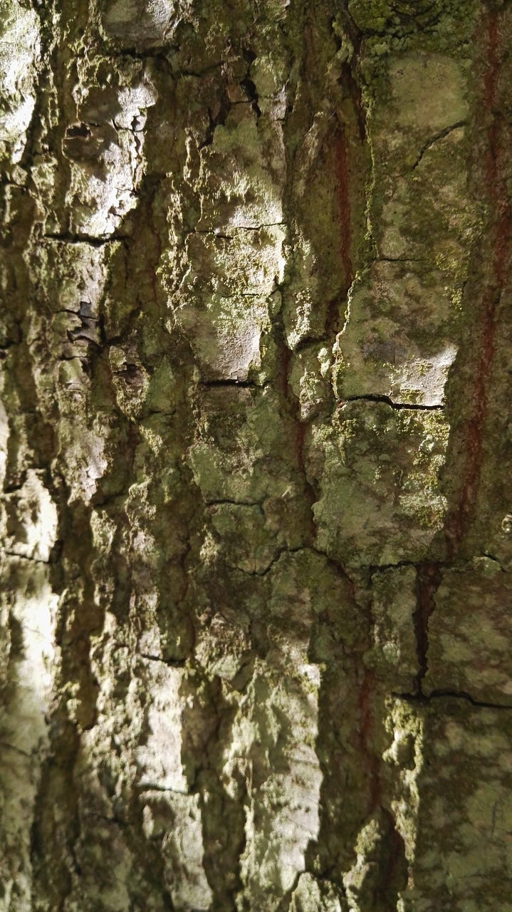 textured, backgrounds, full frame, rough, built structure, close-up, weathered, textured effect, architecture, tree trunk, no people, abstract, pattern, day, outdoors, nature, tree