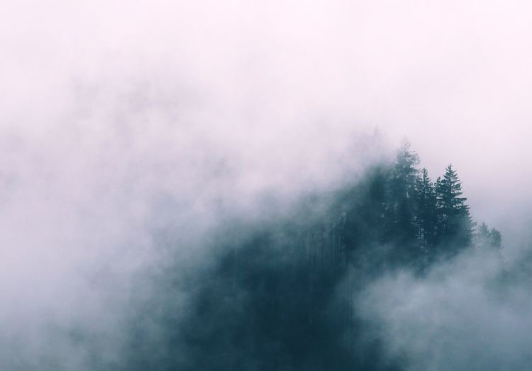 Beauty In Nature Foggy Foggy Day Foggy Weather Misty Misty Day Misty Forest Misty Landscape Misty Mountains  Nature No People Outdoors Scenics Tranquil Scene Tranquility Tree Tree_collection
