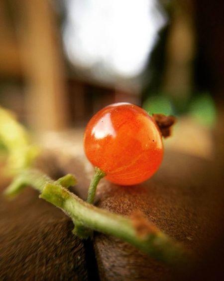 Redcurrant Oneplusone 1dollarmacrolens Macro Summer Berries Macrolens Punaherukka