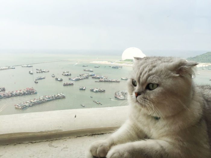 Animal Themes Close-up Day Domestic Animals Domestic Cat Feline Horizon Over Water Mammal Nature No People One Animal Outdoors Persian Cat  Pets Sea Sky Water
