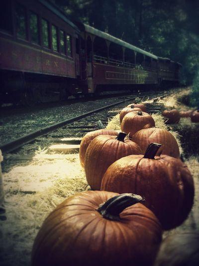 Rail Transportation Railroad Track Transportation Train - Vehicle Outdoors Nature Mode Of Transportation Pumpkins October Northern California Beauty Enjoyment Mendocino County