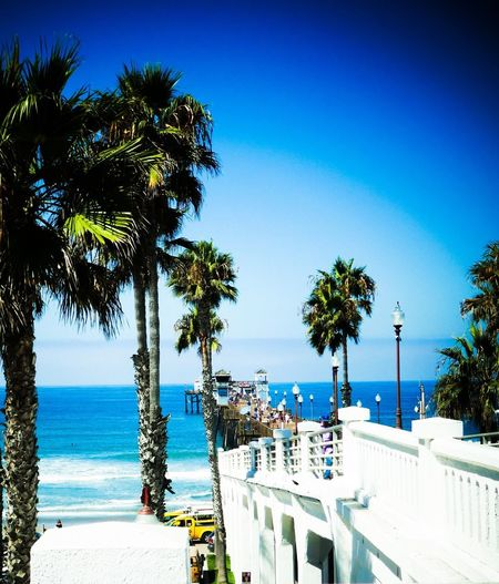 Oceanside Oceanside Pier Blue Sea Palm Tree Outdoors Sunlight Beauty In Nature Architecture Topgun Horizon Over Water Perspective Moments Exploring Magic Pier Ocean Ocean View Exploring New Ground Clear Sky Perspectives And Dimensions California Surf Day Tranquil Scene