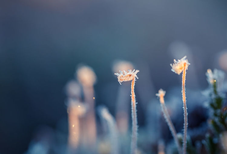 Close-up of frozen plants on field