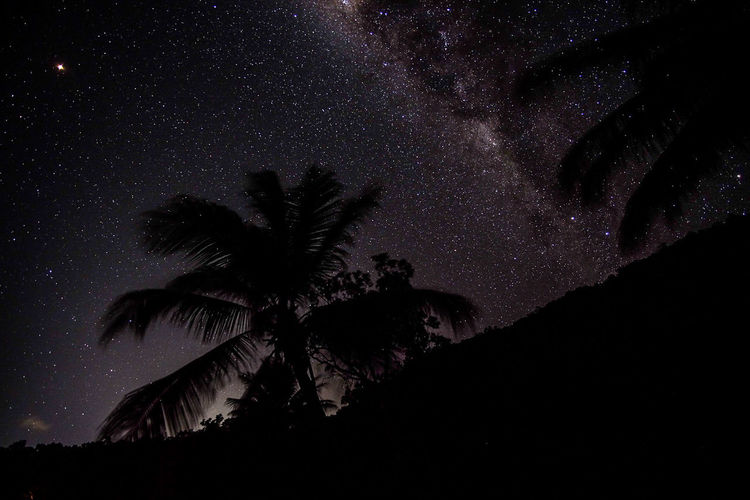 Low angle view of silhouette palm tree against sky at night