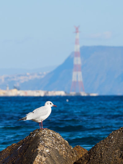 Sea of Messina with a seagull on a rock and the pylon in the background Mediterranean  Sicily Animal Themes Animal Wildlife Animals In The Wild Beauty In Nature Bird Day Italy Messina Nature No People One Animal Outdoors Perching Rock - Object Sea Seagull Sky Water