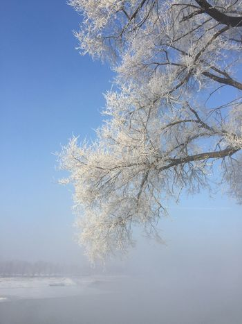 A rime-covered tree along the Songhua River near Wusong Island outside Jilin Traveling Hrb2015 Landscape Nature