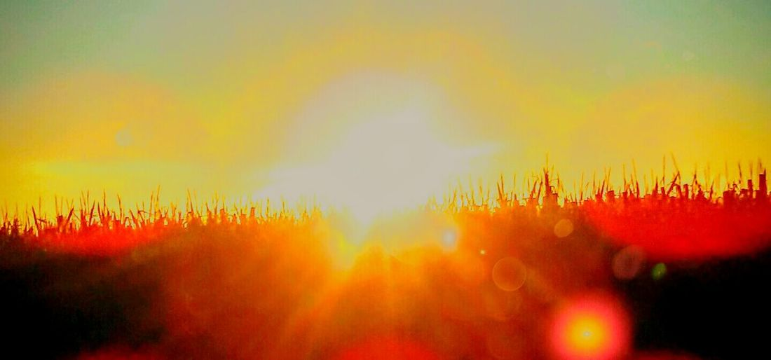 Sunglasses Sunrise Oregonexplored Oregonsunrise Sunflares Bright And Beautiful Bright And Shiny Sunscreen Is Important Getting My Tan On  Sun Kissed Skin Sun In My Eyes Sun Worshipper As Bright As It Gets! Oregon Sun Magestic Trees August 2016 Hello Sunshine Sunshine ☀ Sinfullybeautiful August Morning Suns Up Sunrise Over Cornfield
