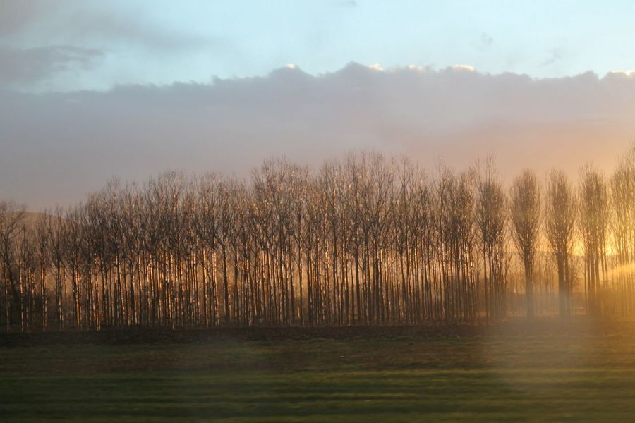 Trees And Sun