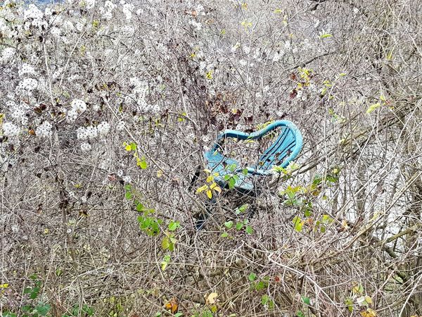Backgrounds High Angle View Day Full Frame No People Close-up Outdoors Nature Chair Chair Art Beauty In Nature Bildfolge Photography Plants Leafs Seat Bizarre Bizarre Nature Bizarre Art