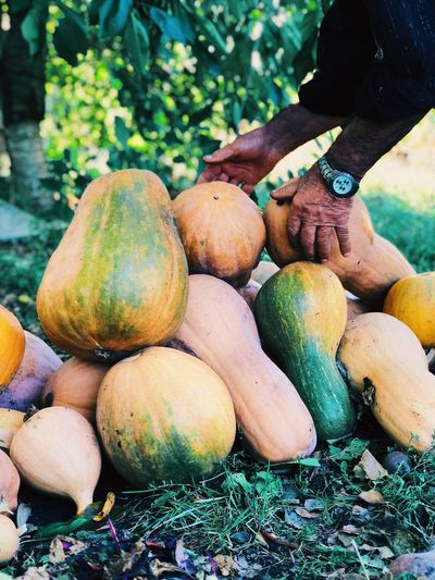 Close-up of hand holding gourd on land
