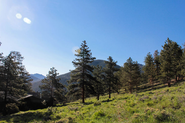 Couldn't get enough of these views!! Beauty In Nature Blue Sky Clear Sky Colorado Day Estes Park Growth Landscape Nature No People Outdoors Scenics Sky Tranquil Scene Tranquility Tree
