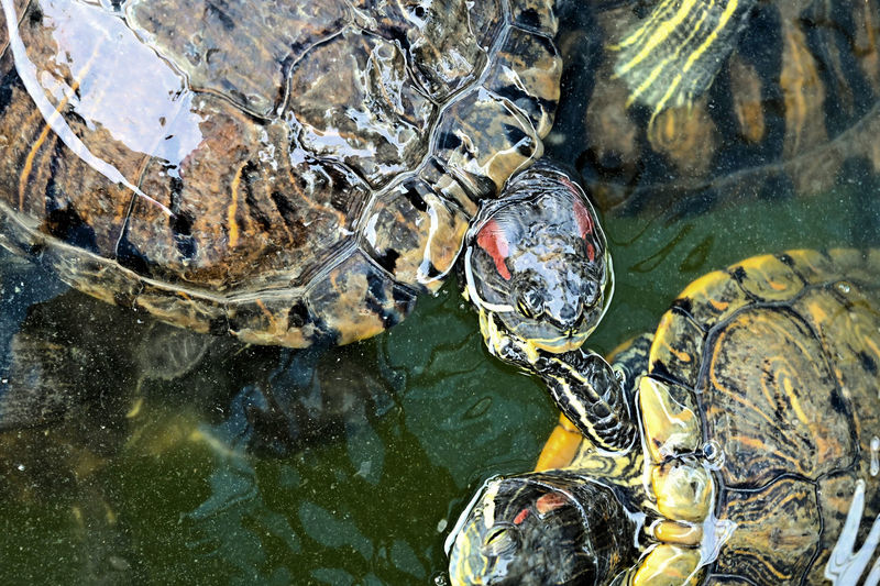The Tortoise touch Water Animal Themes Animal Animal Wildlife Nature Animals In The Wild Lake Vertebrate Swimming Reflection Day Solid Rock One Animal Reptile Outdoors Underwater Rock - Object Marine Animal Head  Tortoise Tortoise Shell