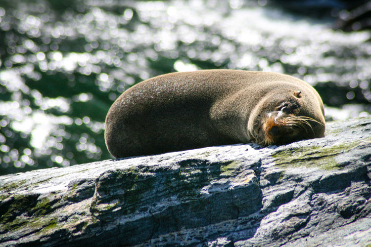 Animal Themes Animal Wildlife Animals In The Wild Close-up Comfortable Day Mammal Nature No People One Animal Outdoors Seal Sleeping Sunlight