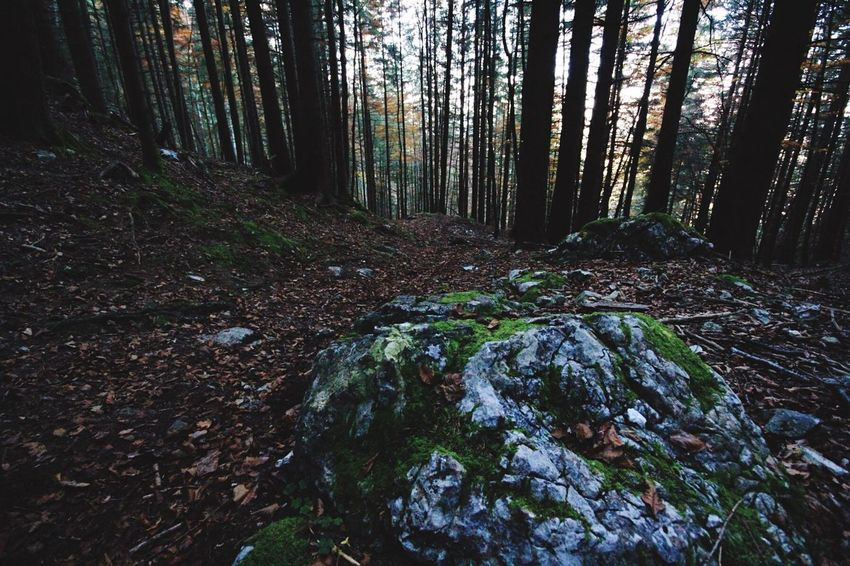 Forest WoodLand Wood Landscape Landscape_Collection Tree Nature Outdoors Tranquil Scene Tree Area Trailrunning