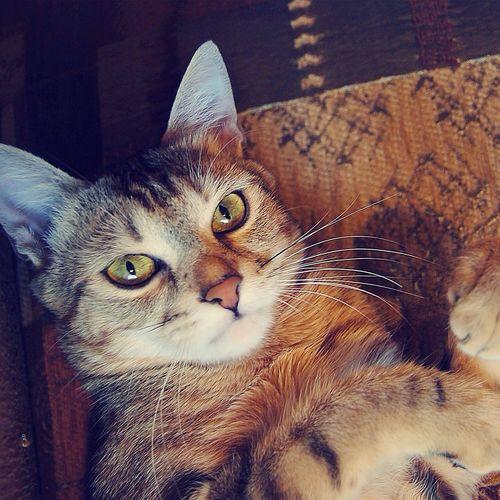 Chili Nikon D40 - 2008 #cat #cats #pet #catsofinstagram #chili #lovely #eyes #amazing #cateyes #kat #makkah #animal #nyan #neko