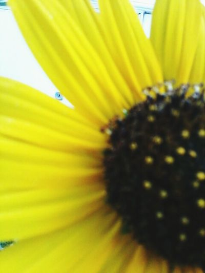 Flower Nature Fragility Close-up Freshness Beauty In Nature No People Outdoors Day Multi Colored Growth Bee Flower Head Paint The Town Yellow