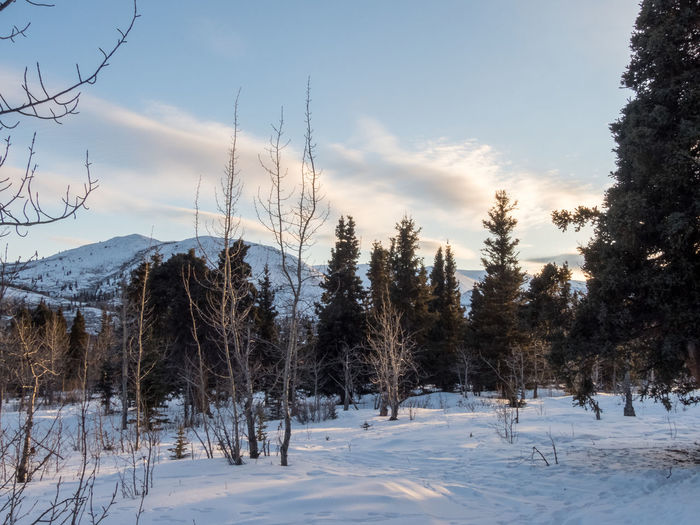 Nature Tranquility Trees Wilderness Area Beauty In Nature Bushes Canada Clouds Day Dusk Forest Landscape Mountain Mountain Range No People Outdoors Scenics Snowcapped Tranquil Scene Wilderness Yukon Territory