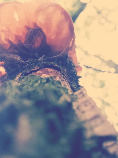 Its a mushroom at a tree in a forest in Herzberg-Germany Taking Photos EyeEm Nature Lover Walking Around Enjoying Life
