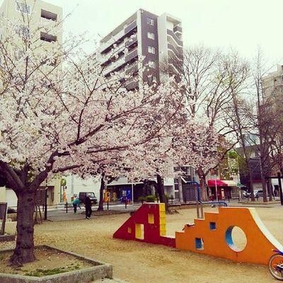 Sakura OSAKA Japan Cherryblossom