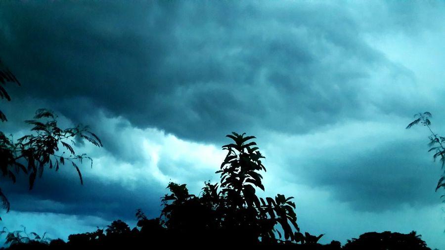 เมฆฝน Tree Pinaceae Pine Tree Cloud - Sky Pine Woodland Nature Sky Igniting Dramatic Sky Storm Cloud No People Pine Wood Treetop Beauty In Nature Thunderstorm Outdoors
