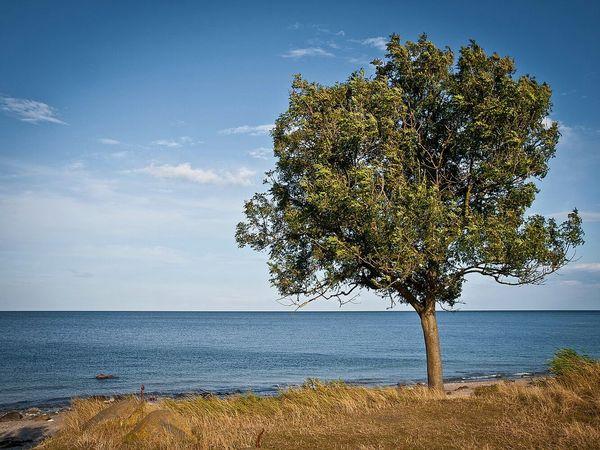 Fehmarn First Eyeem Photo Trees Tree_collection  Tre Landscape_photography Landscape_Collection Landscape