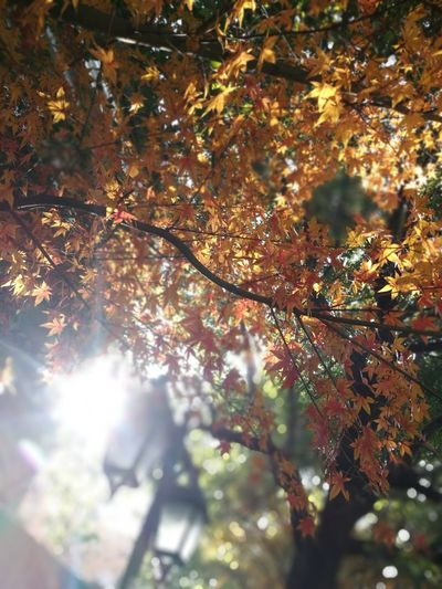 Shanghai Morning Sunlight Autumn Nature Tree Leaf Beauty In Nature Branch Outdoors Fragility