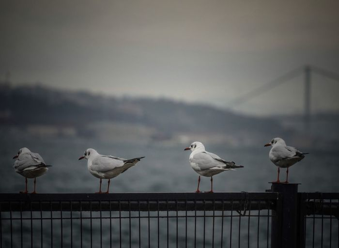 Seagulls Perching On Railing Against Sky
