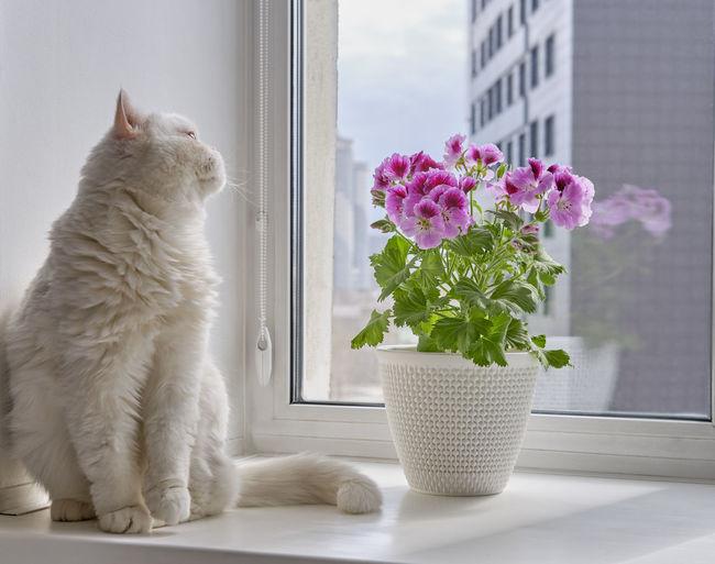 Cat by flower vase on window sill