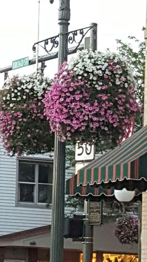 Outdoor Photography Downtown Photography Lakegeneva Wisconsin Taking Photos Flowers Flower Collection Flowerpower Flowerlovers Beautiful Flowers Blooming Peony  Pink Color Commercial Sign In Bloom Street Name Sign