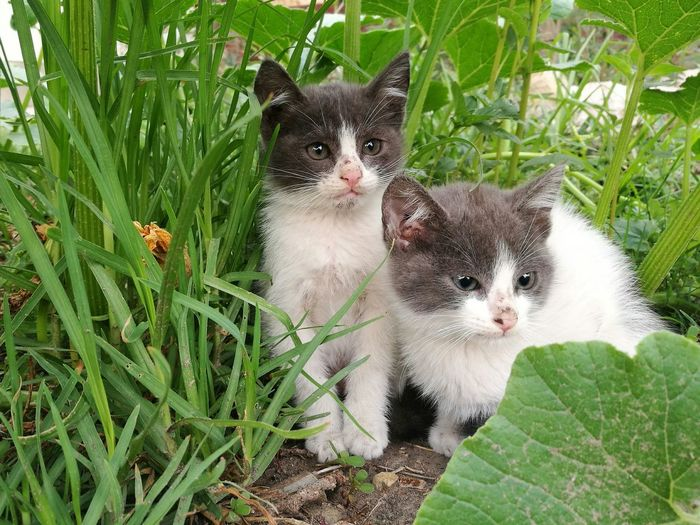 Domestic Animals Pets Feline Gatos 😍 Gatitoslindos Cats Of EyeEm Cats Lovers  Cats 🐱