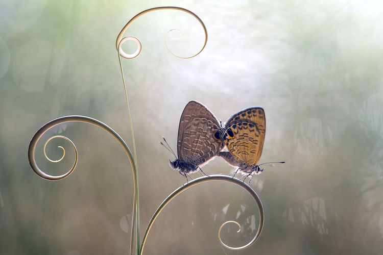 High angle view of butterfly flying