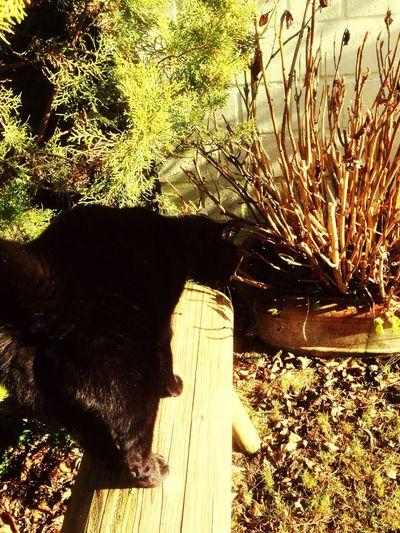 Cat Garden Summer 2015  Munichlove Cat At Home